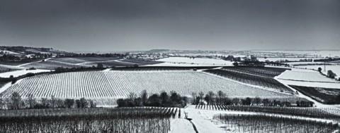 Ebersheimer Weinberge im Winter